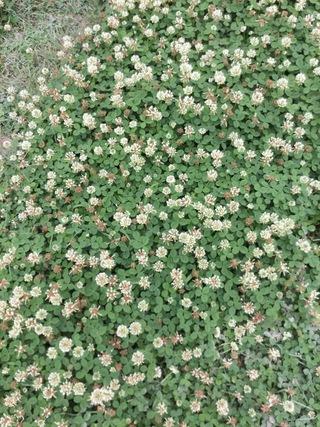 嘉手志川(かでしがー)の花の写真