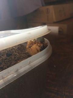 カブト虫画像003