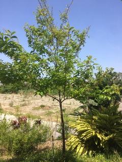 ふぉれすとの庭の木の写真