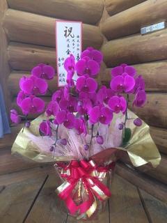 おもちゃ箱とみぐすく様からのお花の写真